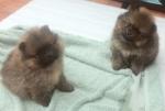 puppies (2)